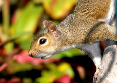 Friendly Squirrel (fotoJENica) Tags: tree colors animal garden arbol rodent interesting nikon squirrel colorful florida miami collection climbing gathering friendly tropical d200 ardilla specanimal animalkingdomelite jennyromney