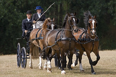 Catton Hall National Horse Carriage Driving 2006