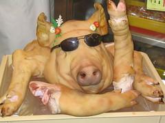 Cool Pig - Yo!