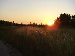 Sonne über Getreidefeld - by thomasderzweifler