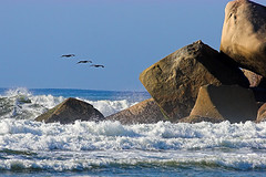 Barra Rocks (konaboy) Tags: birds mexico rocks oaxaca 24566 barradelacruz