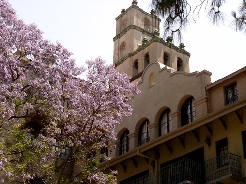 Mission Inn Blossoms