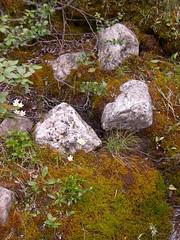 CIMG4765 (Peter Chow) Tags: canada alberta banff canadianrockies lakemoraine