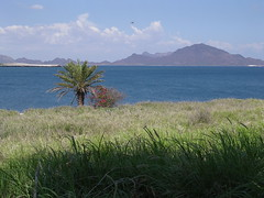 Bahia de San Carlos Sonora Messico America Latina viaggio