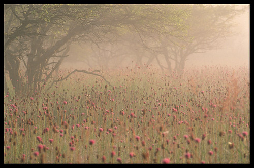 awake thistle flowers