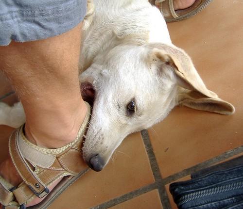 ¿Cómo tener un perro perfecto?