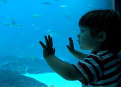 Can I Join Them? (jetrotz) Tags: blue fish window geotagged aquarium sam screensaver explore georgiaaquarium ourkids 4aces geo:lat=33762791 geo:lon=84393947