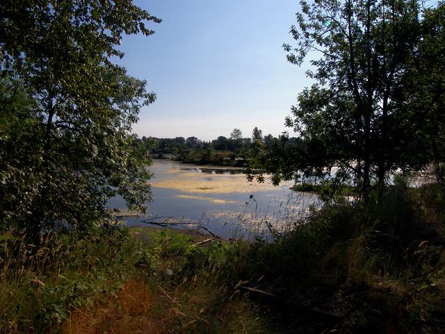 The Ponds 1