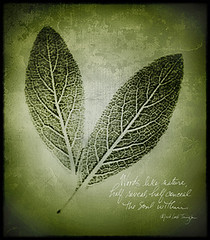 nature's mystery (Kelly Angard) Tags: green nature leaves canon leaf soul xray scanned reveal scannerphotography kellya kellyangard efs1755mm kellyafineartphotography digitalrebelxtefs1755mm
