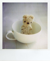 16118 (+yooco+) Tags: bear stuffedtoy cup animal toy polaroid sx70 stuffed teddy handmade bears craft plush plushies teddybear stuffedanimal handsewn etsy artistbear