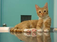 EPSN6239 (jacky elin) Tags: orange cats cat mix kitten tabby miumiu