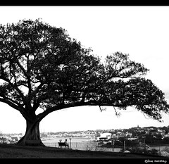 Alone, with a tree. (PSD) (norbography) Tags: bw tree women sydney lonely vote myfaves observatoryhill seeingsydneysoloshow auselite toddnorbury wwwpopular favewww wpmvote