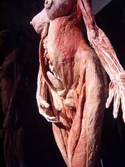 2006-3-27-Body worlds 2 exibit at the Denver Museum (39) (graysonfamily) Tags: 2 museum weird pics body denver worlds corpse bizarre bodies plastination plastinated specialinterest exibit madeyoulook httpwwwmyspacecomepigee