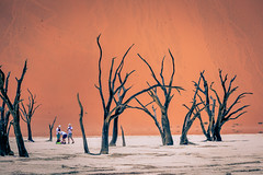 Dead Vlei (Steven-ch) Tags: sesriem sossusvlei sand desert travel namibia deadvlei tree acaciaerioloba tourist canon africa dunes namibnaukluftnationalpark hardapregion na