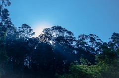 Sun rays (AnilVarma) Tags: sky sun india green nature 50mm nikon asia bluesky rays nikkor sunrays tress tamilnadu ooty d7000
