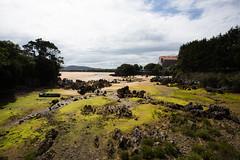 Playa de Isla (vpogarcia) Tags: espaa musgo verde playa arena isla rocas arenal cantabria norte marea