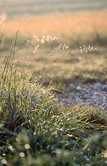 Die Grser meinen, ich sei zu weit vom Weg abgekommen und weisen mir die Richtung. (Manuela Salzinger) Tags: morning summer sunrise drops sommer meadow wiese drop dew tau sonnenaufgang morgen tropfen