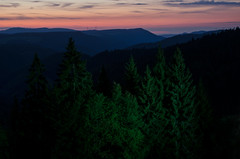 Black Forest (samuelloz) Tags: germany schwarzwald nera foresta