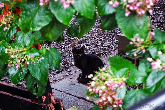 Today's Cat@2015-08-17