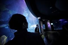 Selfie Stick (@fotodudenz) Tags: aquarium angle sony voigtlander wide australia melbourne victoria 12mm ultra a7 heliar 2015 sonya7