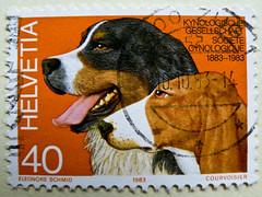 great stamp Helvetia 40c (Bernese Mountain Dog & Schwyz Hound; Berner Sennenhund & Schwyzer Laufhund) Swiss Schweiz Switzerland stamp timbre Helvetia timbre-poste Suisse francobolli bollo Svizzera selo Suíça sellos Suiza 瑞士邮票 yóupiào Ruìshì почтовая марка (stampolina, thx for sending stamps! :)) Tags: orange dog chien cão cane postes schweiz switzerland suisse suiza stamps swiss hound hond stamp perro hund porto pies helvetia kutya svizzera bernesemountaindog timbre postage hunde franco 狗 selo bernersennenhund marka bolli swizz sello sellos سگ köpek briefmarken koira pulu briefmarke σκυλί francobollo selos timbres szwajcaria francobolli bollo timbresposte znaczki пас الكلب frimerker pulları schwyzerlaufhund соба́ка frankatur postapulu antspaudai znamk schwyzhound