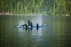 British Columbia Luxury Fishing & Eco Touring 66