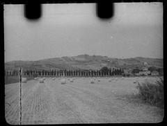 Cupressaceae (Minimal Cinema) Tags: bw motion film kodak picture 16mm d23 7219 kiev30 500t vision3