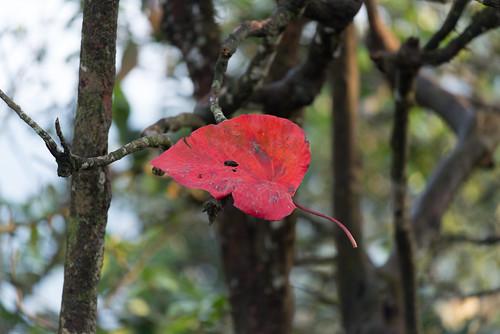 Ein rotes Blatt im Dschungel