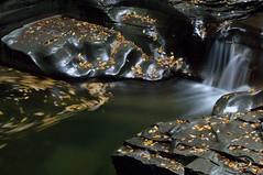 Watkins_Glen_20150912_059 (EHPett) Tags: park newyork leaves waterfall rocks stream state swirl watkinsglen