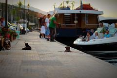 Been a long a day for the stray cats (kajsatoresson) Tags: summer cats cat pier relaxing chillin greece relaxation straycat pir hamn restaurang grekland longdayforthestray