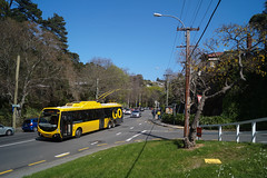Glenmore Street (andrewsurgenor) Tags: city newzealand urban bus buses yellow electric busse transport transit nz wellington publictransport streetscenes omnibus trolleybus obus trolleybuses citytransport trackless nzbus gowellington