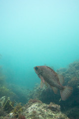 20150927-DSC_7147.jpg (d3_plus) Tags: sea sky fish beach japan scenery underwater diving snorkeling  shizuoka    apnea izu j4            1030mm  nakagi 1   1030mmpd wpn3