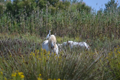 Friends (Hachimaki123) Tags: horse animal caballo ave