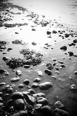 Heijastus 2 (timoppi) Tags: nature finland helsinki outdoor balticsea syksy vuosaari kallahti ulkoilu