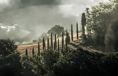 Tuscan Avenue (Elliott Bignell) Tags: morning italien trees italy mist dawn italian italia nebel row tuscany toscana avenue morgen cypresses italie toskana italienisch zypressen montespertoli fornacette polvereto viamontetermini