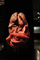 Science World - October 15, 2015 (rieserrano) Tags: human organs bodyworlds plastination