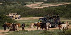 Trident Juncture - Sardinien (Redaktion der Bundeswehr) Tags: italien tiere landschaft sardinien nato khe teulada mungo bundeswehr luftwaffe grosbung bundeswehrfoto