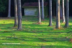 OTZARRETA (Angel Ezkurra photography) Tags: autumn verde paisaje alava araba hayas gorbea euskoflickr zeanuri barazar otzarreta eitbcom