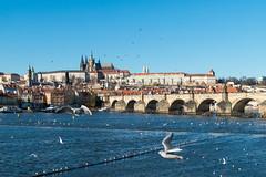 december 2015 || prazsky hrad (Daniil_Chizhov) Tags: city travel bridge winter sky river prague charles praha most charlesbridge vltava stvituscathedral karlvmost karlv
