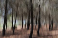 Monte Calamita. (LucaBertolotti) Tags: trees tree alberi albero bosco foresta blurry blurred motionblur mosso elba isoladelba toscana italia italy world landscape montecalamita