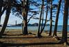 Golden Gate Bride through Cyprus Trees_4708 (UniversalShooter) Tags: bridge golden gate beauty water bay san francisco