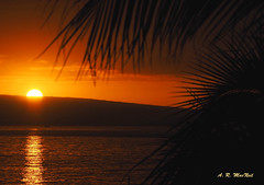 A Golden Maui Moment - Maui Hawaii (Barra1man) Tags: mauisunset agoldenmauimoment sun water palmtrees foliage pacificocean pacific seascape reflection light lanai kaanapali island goldenhour olympus olympusem1 iso800 lens300mm hawaii unitedstates