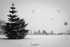 snow tales #05 (C*D*F) Tags: neve fiocchi bianconero blackwhite snow snowflakes