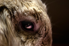 #bunny #rabbit #cute #easter #pet #bunnies #love #bunnylove #rabbits #hollandlop #adorable #baby #animal #fluffy #pets #animals #babybunny #conejo #bunbun #funny #creepy #scary #evil #dark #art #eyes #demon #darkness #photo #photooftheday #canon #photo (saragullo) Tags: scary bunnylove eyes pets rabbits darkness creepy animal funny easter cute art dark pet fluffy baby photooftheday hollandlop rabbit conejo canon bunnies demon adorable photo bunbun evil animals love babybunny bunny
