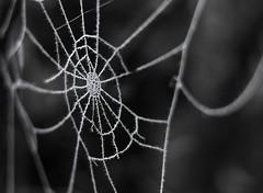 Frozen web (marcmayer) Tags: frozen ice crystal eiskristall spinnennetz spider web frost cold kalt winter nikon d5200 nikkor 50mm f18 blackwhite black white schwarz weis macro dof depth field bokeh