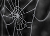 Frozen web (marcmayer) Tags: frozen ice crystal eiskristall spinnennetz spider web frost cold kalt winter nikon d5200 nikkor 50mm f18 blackwhite black white schwarz weis macro dof depth field bokeh