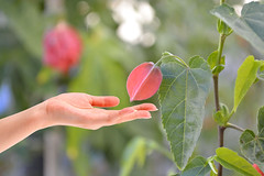 A Delicate Touch (swong95765) Tags: leaves plant bokeh reach touch hand arm fingers beauty pink