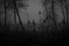Misty evenings (gina.nicole.tesloff) Tags: misty night nightsky nightlife grey trees wildlife woodland white woods winter enchanting england efflorescence evening train track travel uk outdoors ominous pattern plant pretty petal perspective artistic sky mist fog dark depth design forest glow light frozen cold canon contrast blackandwhite nature view beautiful natural