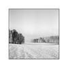 Winter Wanderer (cardijo) Tags: austria österreich salzburg landschaft landscape schnee snow winter tree baum sw bw blackandwhite schwarzweis analog film fp4 rodinal rolleiflex tessar carlzeiss nikon coolscan