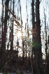 there will be fireworks (emocjonalna) Tags: macro grass backlight light weed nature bokeh winter poland warsaw